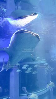 水中反射の写真・画像素材[2998428]