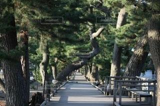 木に囲まれた道を進むの写真・画像素材[3584319]