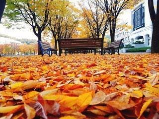 落ち葉とベンチの写真・画像素材[2990925]