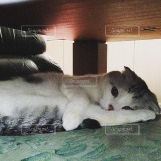 猫 - No.115068