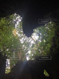 ウィルソン株の写真・画像素材[2990990]