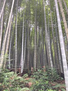森の中の木の写真・画像素材[2992581]