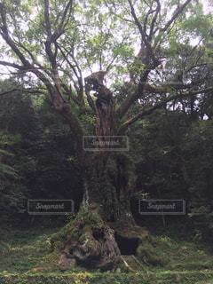 木の写真・画像素材[2992593]
