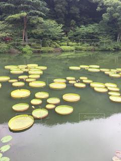 池の近くでの写真・画像素材[2992614]
