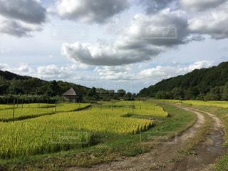 緑豊かな畑のクローズアップの写真・画像素材[2994762]