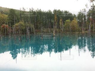 木に囲まれた水の体の写真・画像素材[2994875]