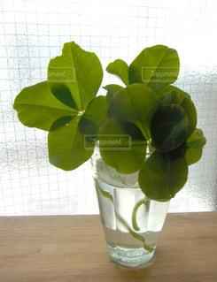 植物の写真・画像素材[142101]