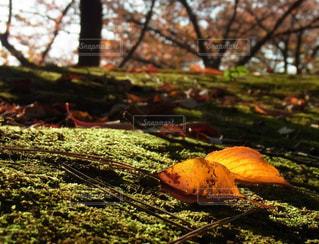 自然の写真・画像素材[142157]