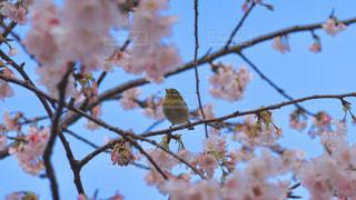 木の枝に止まっている小鳥2の写真・画像素材[2996486]
