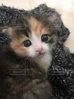猫の写真・画像素材[115200]