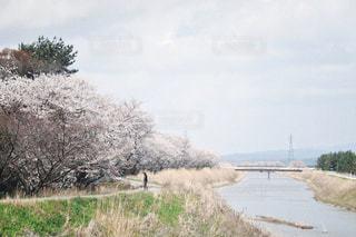 お散歩日和の写真・画像素材[2993588]
