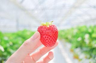果物を持つ手のクローズアップの写真・画像素材[3098308]