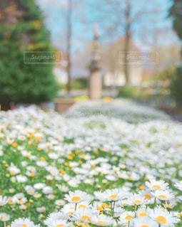 花園のクローズアップの写真・画像素材[3217867]