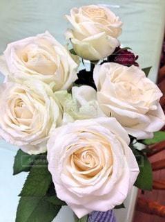 花の写真・画像素材[115653]