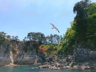 水の上を飛ぶウミネコの写真・画像素材[2998455]