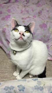 猫の写真・画像素材[130508]