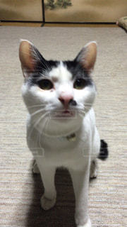 猫 - No.130511