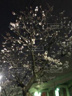 木のクローズアップの写真・画像素材[3059820]