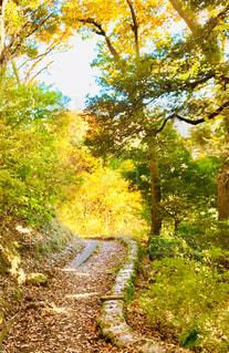 森の中の小道の写真・画像素材[3010631]