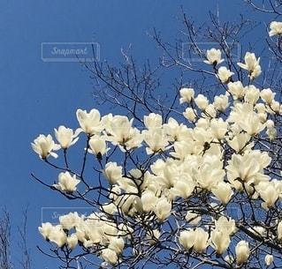 白い花の写真・画像素材[3022115]