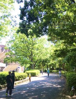 木の隣の通りを歩いている人々のグループの写真・画像素材[3199607]