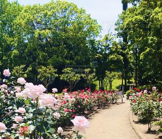 花園のクローズアップの写真・画像素材[3199915]