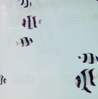 魚の写真・画像素材[122357]