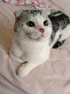 猫の写真・画像素材[122452]