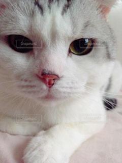 猫の写真・画像素材[122454]
