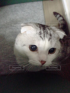 猫の写真・画像素材[122456]