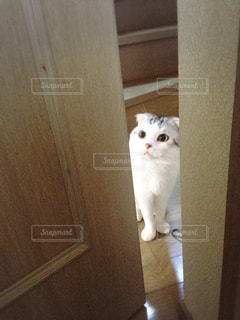 猫 - No.122460