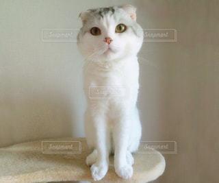 猫の写真・画像素材[122651]