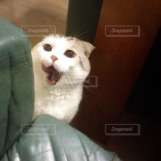 猫 - No.122654