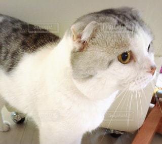 猫 - No.146151