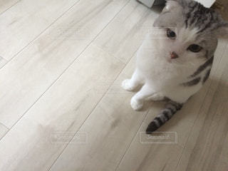 猫 - No.168374