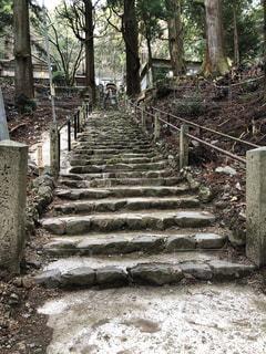 神社への階段の写真・画像素材[2996654]