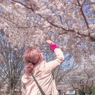 お花見の写真・画像素材[2998202]