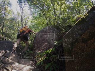 岩巣山登山の写真・画像素材[3888754]