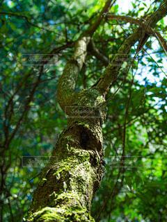 森の木の写真・画像素材[4778149]