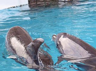 イルカの写真・画像素材[3002788]