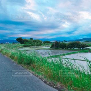 青空と田んぼの写真・画像素材[3013828]