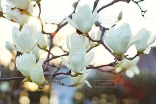 花のクローズアップの写真・画像素材[3003261]