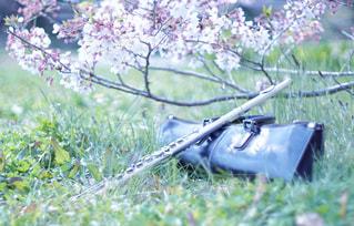 桜とフルートの写真・画像素材[3088441]