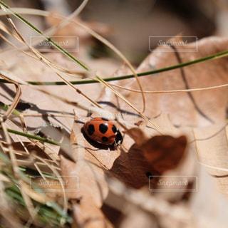 てんとう虫。春の訪れ。の写真・画像素材[3006341]