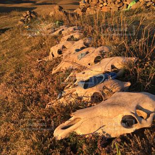 夕暮れ時。モンゴル高原の祈り。の写真・画像素材[3044885]