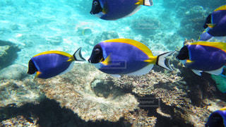 モルディブの熱帯魚の群れの写真・画像素材[3056250]