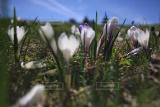 近くの花のアップの写真・画像素材[1217552]