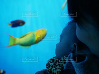 魚の写真・画像素材[1217616]