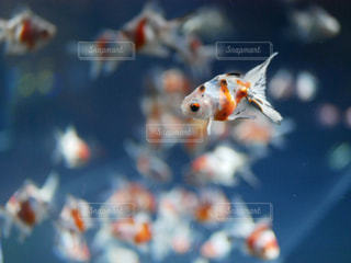 近くに魚のアップの写真・画像素材[1217617]