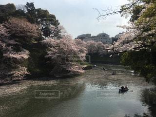 水の体の横にあるツリーの写真・画像素材[1217671]